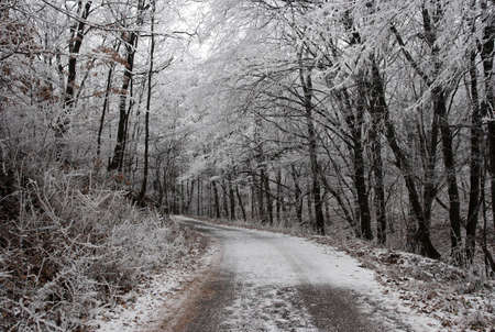 Path through a winter forest with frosty trees Stock Photo - 3800339