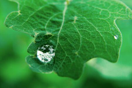 Raindrop on a green leaf photo