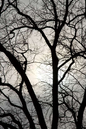Bare tree branches against twilight sky photo