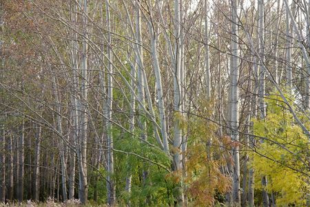 Trees of a forest in autumn photo