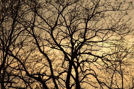 Bare, leafless branches of a tree in winter photo