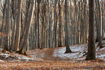 Bare forest in winter with frost on the ground photo