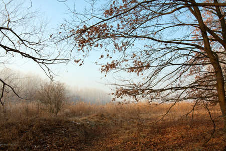 Bare forest in late autumn, misty weather photo