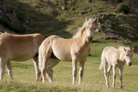 conservation grazing: Group of horses in the wild