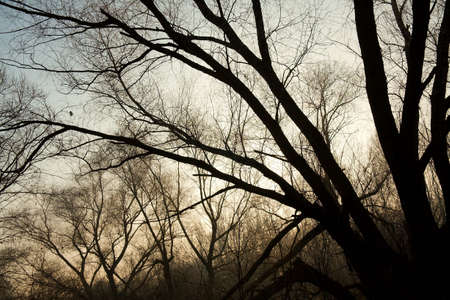 Bare, leafless trees in the forest in winter photo