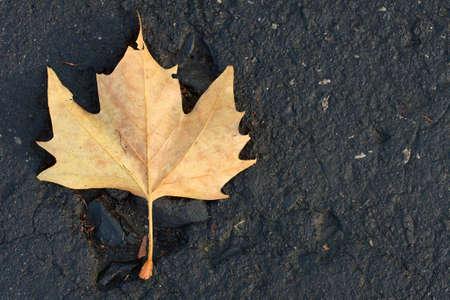 road autumnal: Fallen autumn leaf on an asphalt road Stock Photo