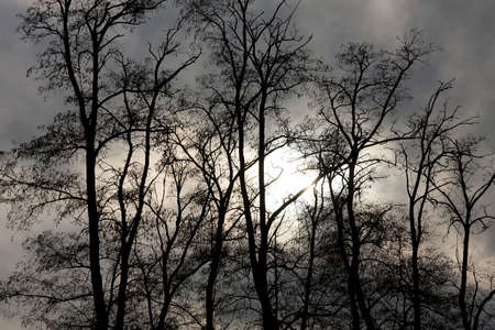 Bare tree branch silhouettes against twilight sky Stock Photo