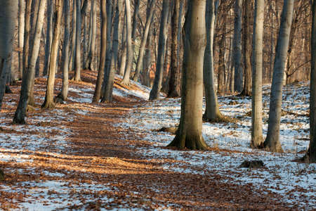 Late autumn forest with some snow on the ground photo