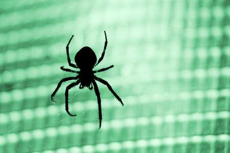 segmentata: Silhouette of a cross-spider against green light Stock Photo