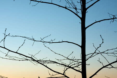Bare tree branches against dusk sky photo