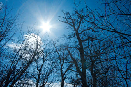 Sun is shining above the bare trees of winter photo