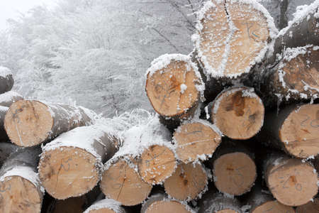 A pile of logs in the winter snow