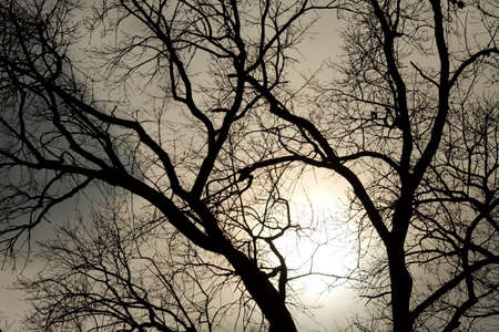 Bare tree branches against glowing sky