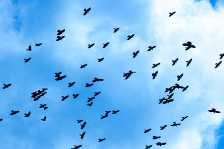 Crows flying against the blue sky Stock Photo - 6207872