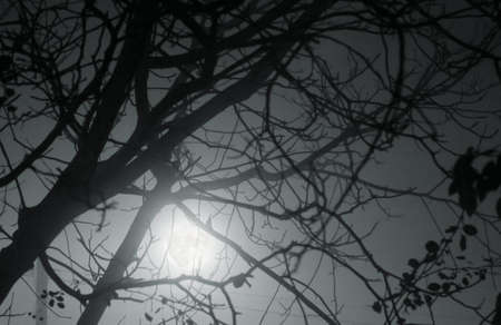 Bare tree branches in moonslight photo