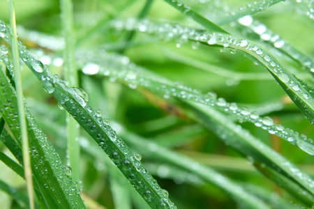 Grass closeup with raindrops photo