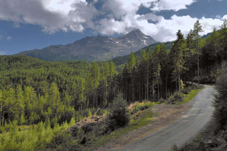 dirtroad: Mountain landscape with forest and dirt-road