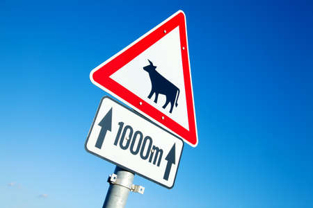 Warning traffic sign show cows photo