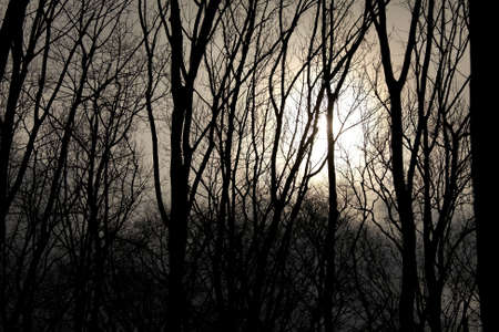Bare tree branches with fading sun behind them photo