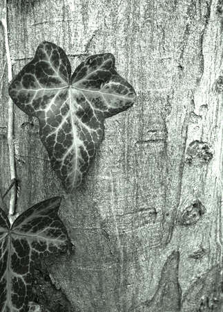 Treetrunk and leaves background, toned image photo
