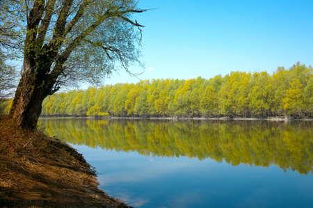 Río con reflejos de árboles sobre la superficie del agua suave