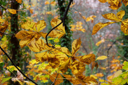 Autumn leaves in rainy weather photo