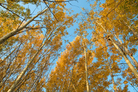 Forest in autumn with colored leaves, blue sky Stock Photo - 7723368