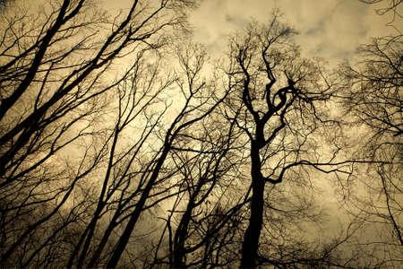 �rvores sem folhas com ramos assustadores