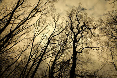 Leafless trees with creepy branches photo