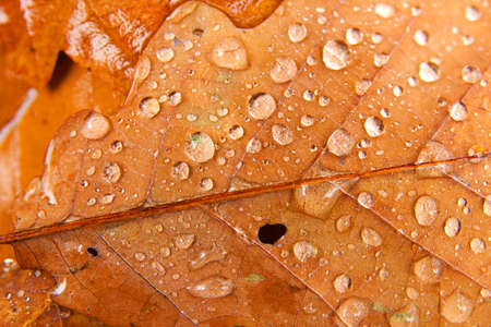 Autumn leaves with water drops after rain photo