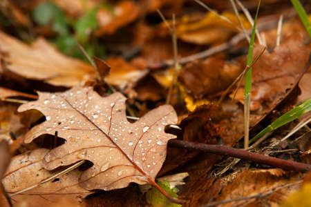 fallen tree: Autumn leaves on the ground after rain