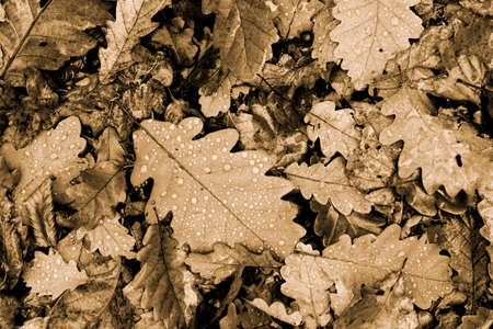 Fallen leaves with raindrops on the ground photo