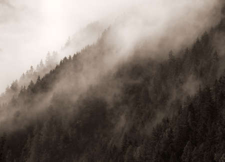 Mountains with forest covered in mist