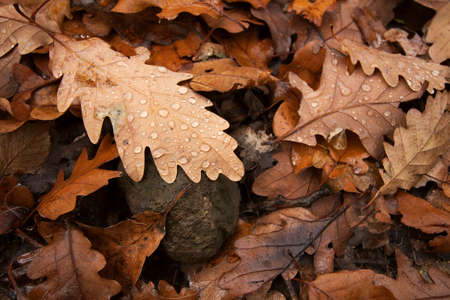 Fallen autumn leaves with raindrops photo
