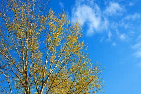 Autumn treetop against blue sky Stock Photo - 8014112