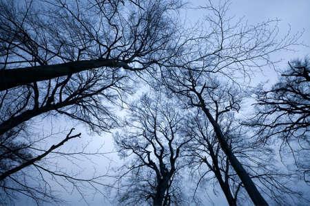 Creepy leafless trees towering against dusk sky Stock Photo