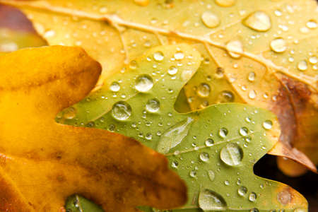 Fallen leaves with raindrops Stock Photo