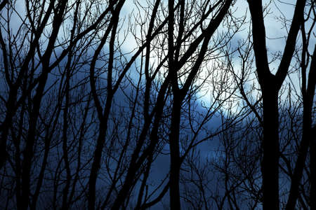 Bare leafless trees against winter twilight sky photo