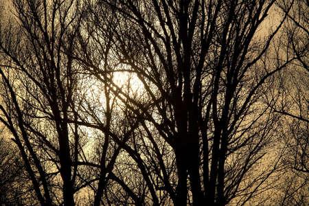 Bare, leafless trees against twilight sky photo