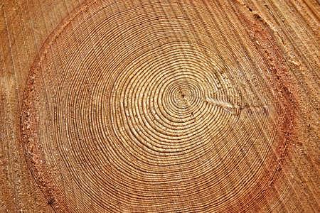 Freshly cut tree trunk