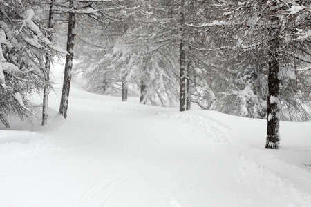 Snowy forest path in winter Stock Photo - 8385610