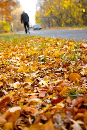 Fallen autumn leaves on the ground photo