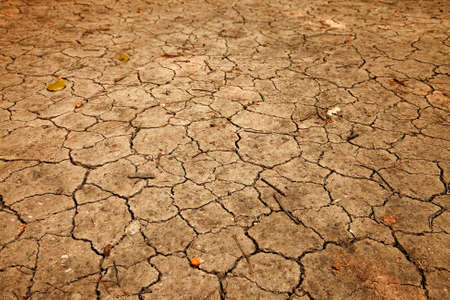 Dry, cracked soil, angled view