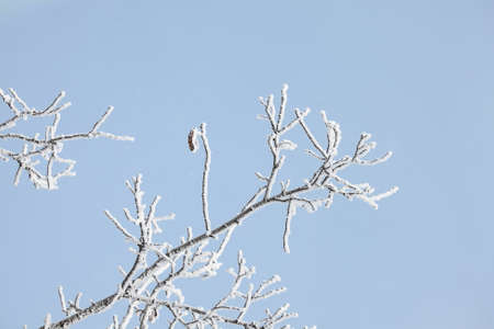 frostbitten: Frozen, Icy branches of a tree