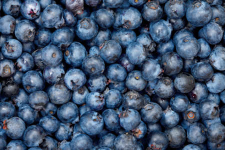 Blueberry background photo