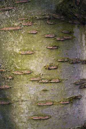 Tree bark texture close up Stock Photo - 12652704