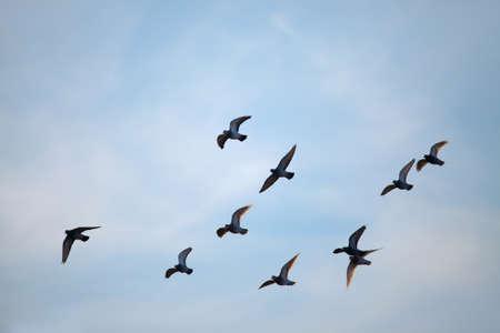 Flock of birds flying in the sky Stock Photo