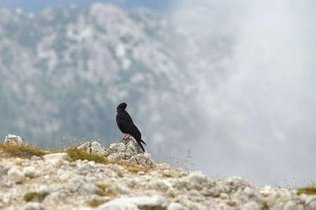 Crow on a mountain cliff Stock Photo - 15904045