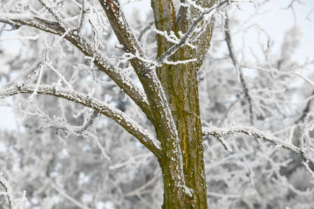 Winter tree detail with frost Stock Photo - 16113340