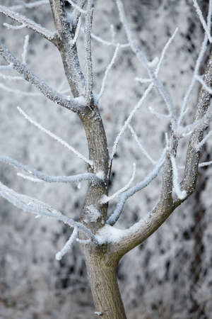 Winter tree with frost on branches Stock Photo - 16221359
